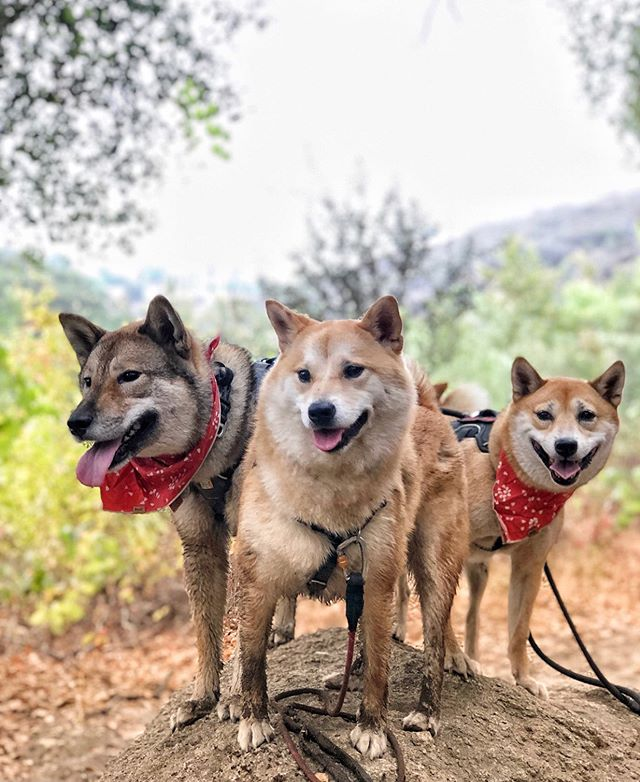 Is your furry friend also your favorite hiking buddy? Our new list of recommended hikes has plenty of dog-friendly trails for you to explore together! One of our favorite dog-friendly inland trails is the Santa Margarita Preserve. This 5.2 miles out and back hike takes you along the Santa Margarita River. There are plenty of places for you and your dog to take a break and cool off! If 5.2 miles sounds like too much, the 1.5 mile mark is a good destination. There you will find a sandy area perfect for picnics by the river.  For more dog-friendly trails, please visit our post from three days ago and enter our giveaway! (📷: @iamasuperhiro) #hikesandiego #hikesd