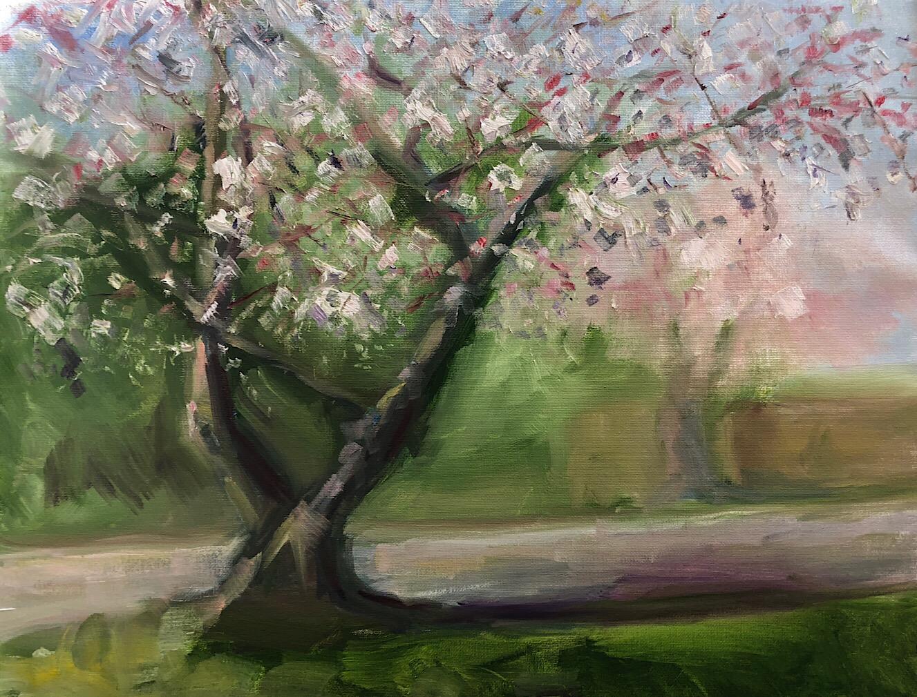 "Geoff Watson, ""Flowering cherry tree,"" oil on canvas, 16"" x 20,"" 2018."