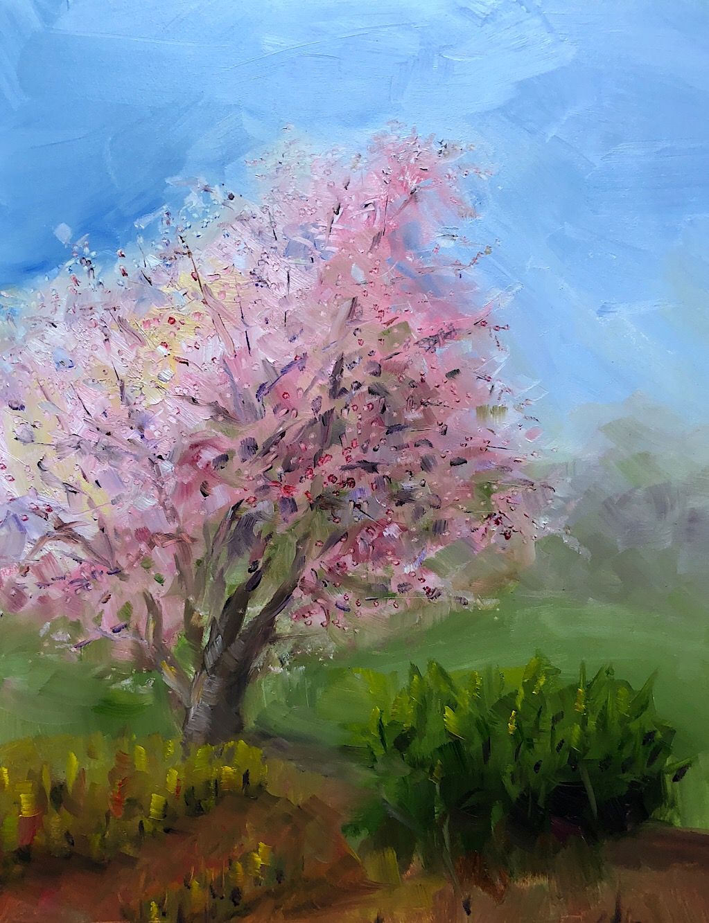 "Geoff Watson, ""Cherry blossoms,"" oil on panel, 11"" x 14,"" 2018."
