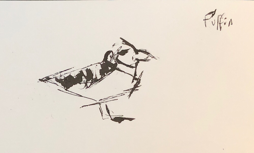"Geoff Watson, ""Puffin,"" ink on paper, 5"" x 8,"" 2018."