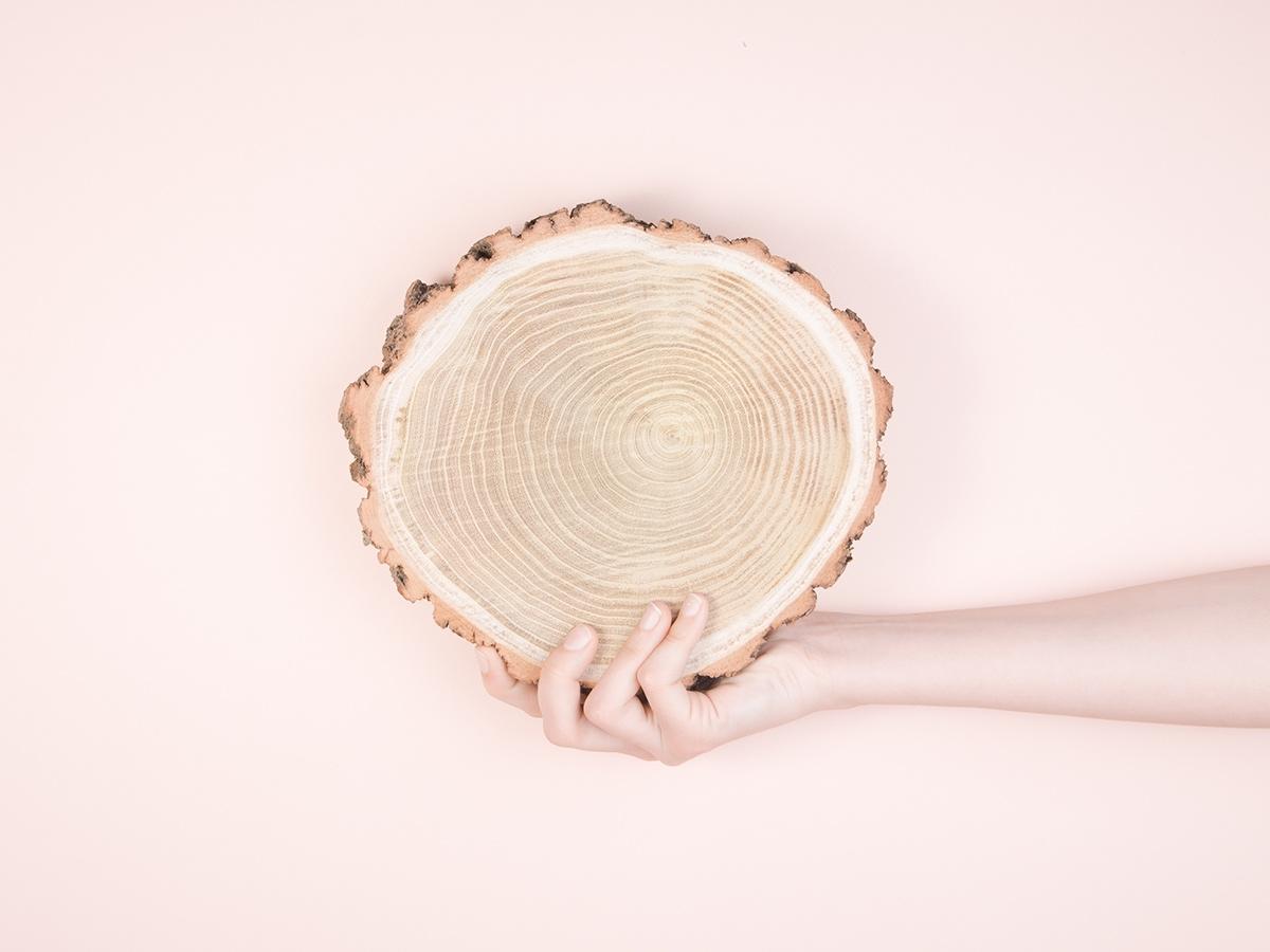 Knieja wood