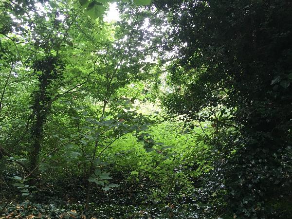 pound lane woodland 1.jpg