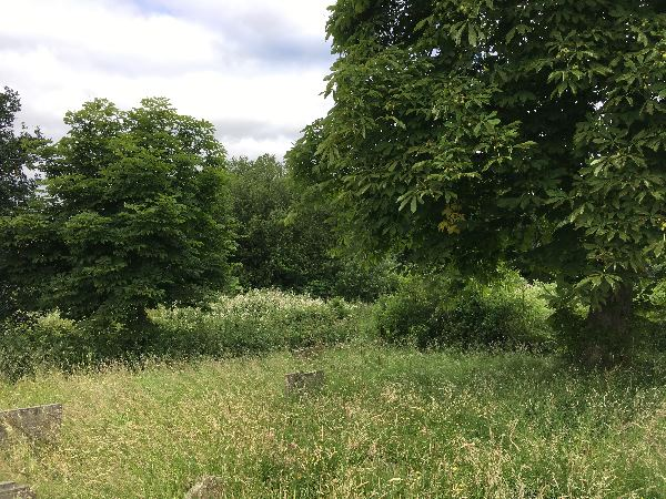 pound lane woodland 3.jpg