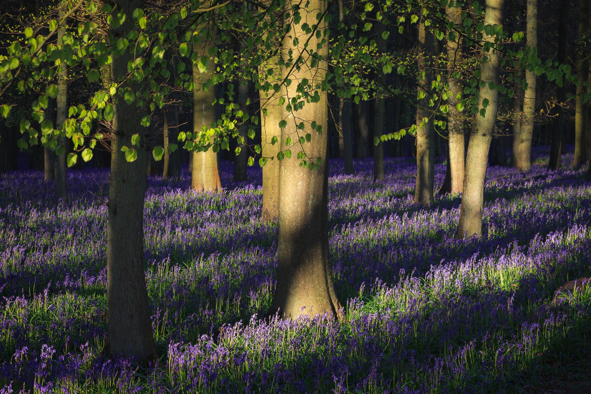 May - Ashridge Estate, Hertfordshire
