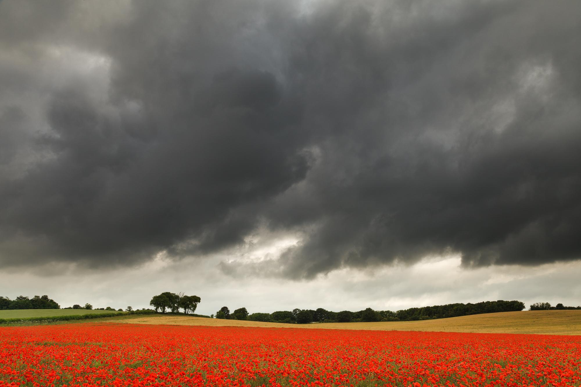 June - Royston, Hertfordshire