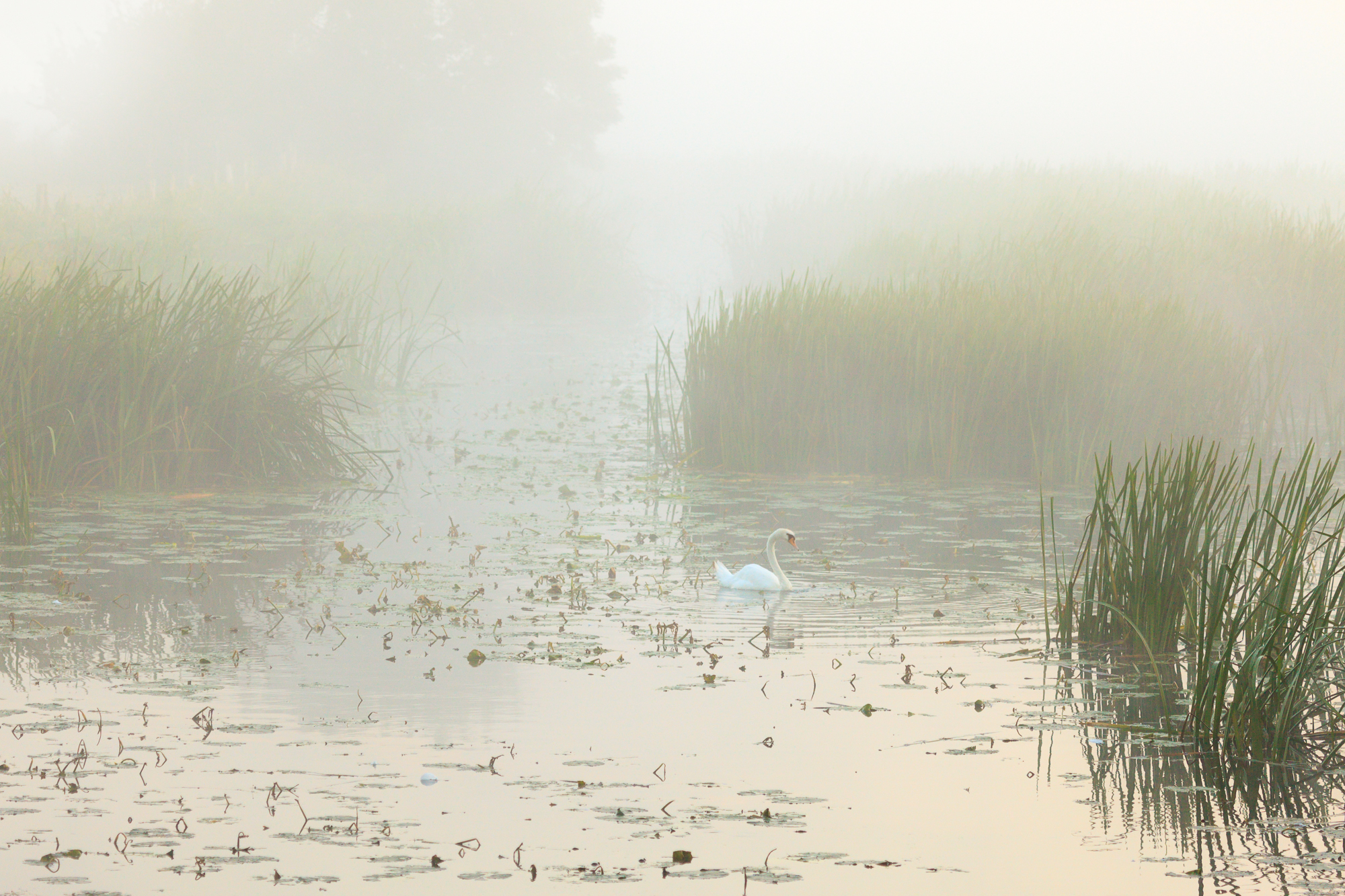 August - Sudbury, Suffolk