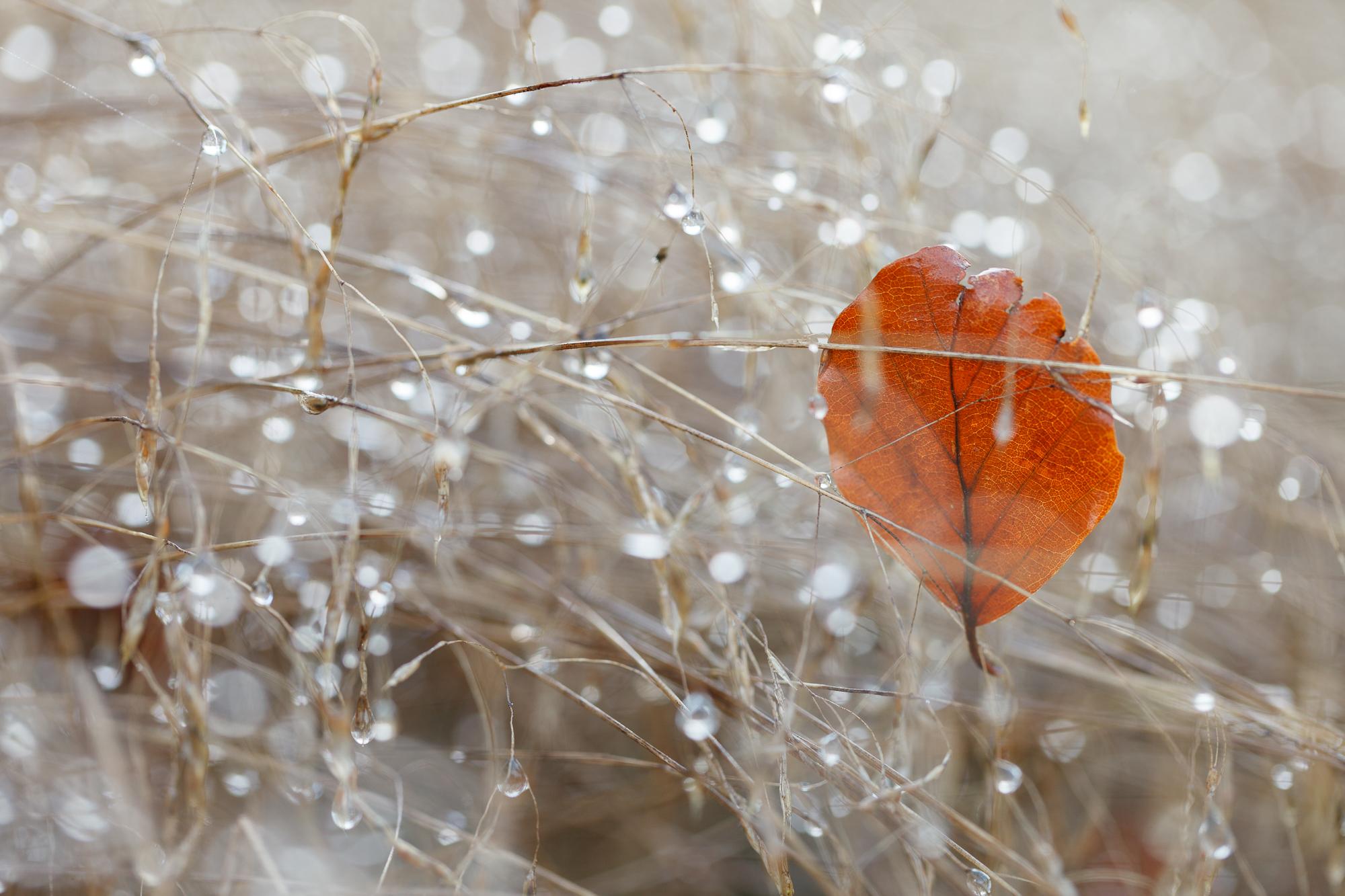 November - Thetford Forest, Norfolk