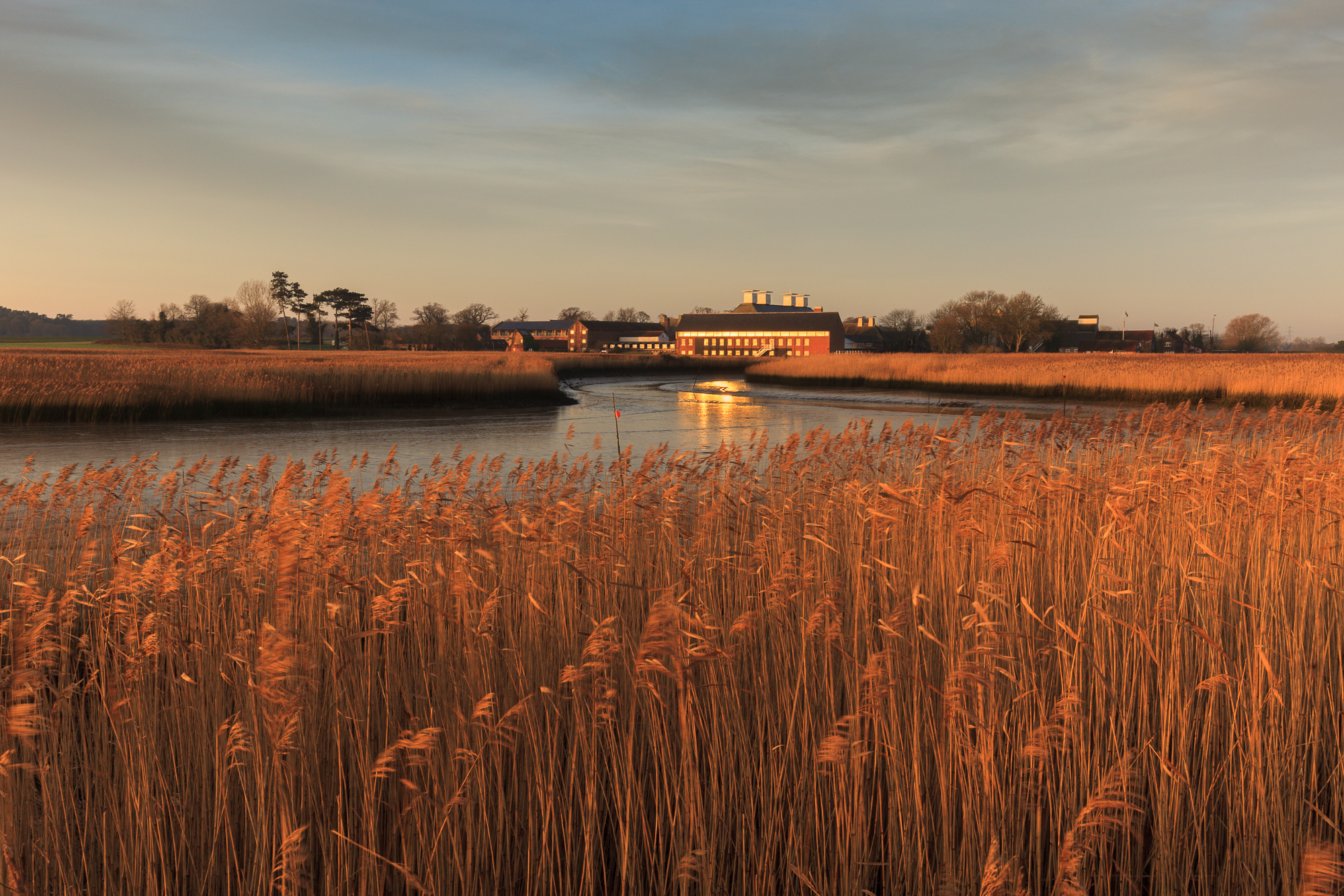 The view across the reed beds in warm winter light