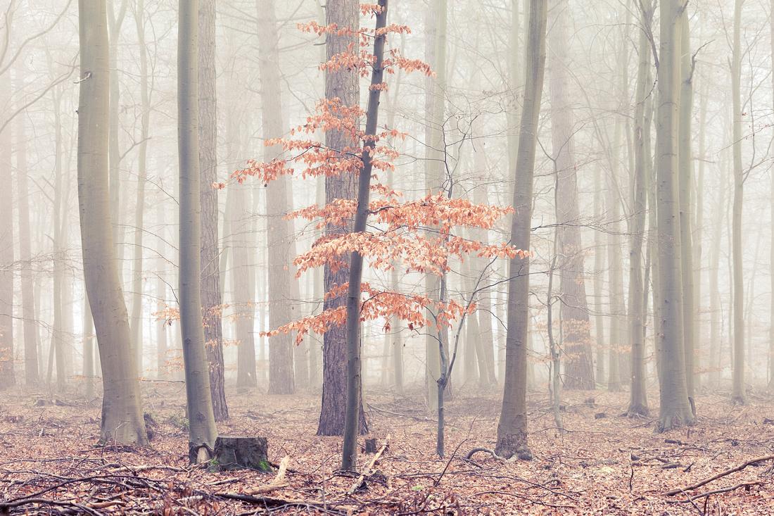 Freezing fog at Thetford Forest, Norfolk