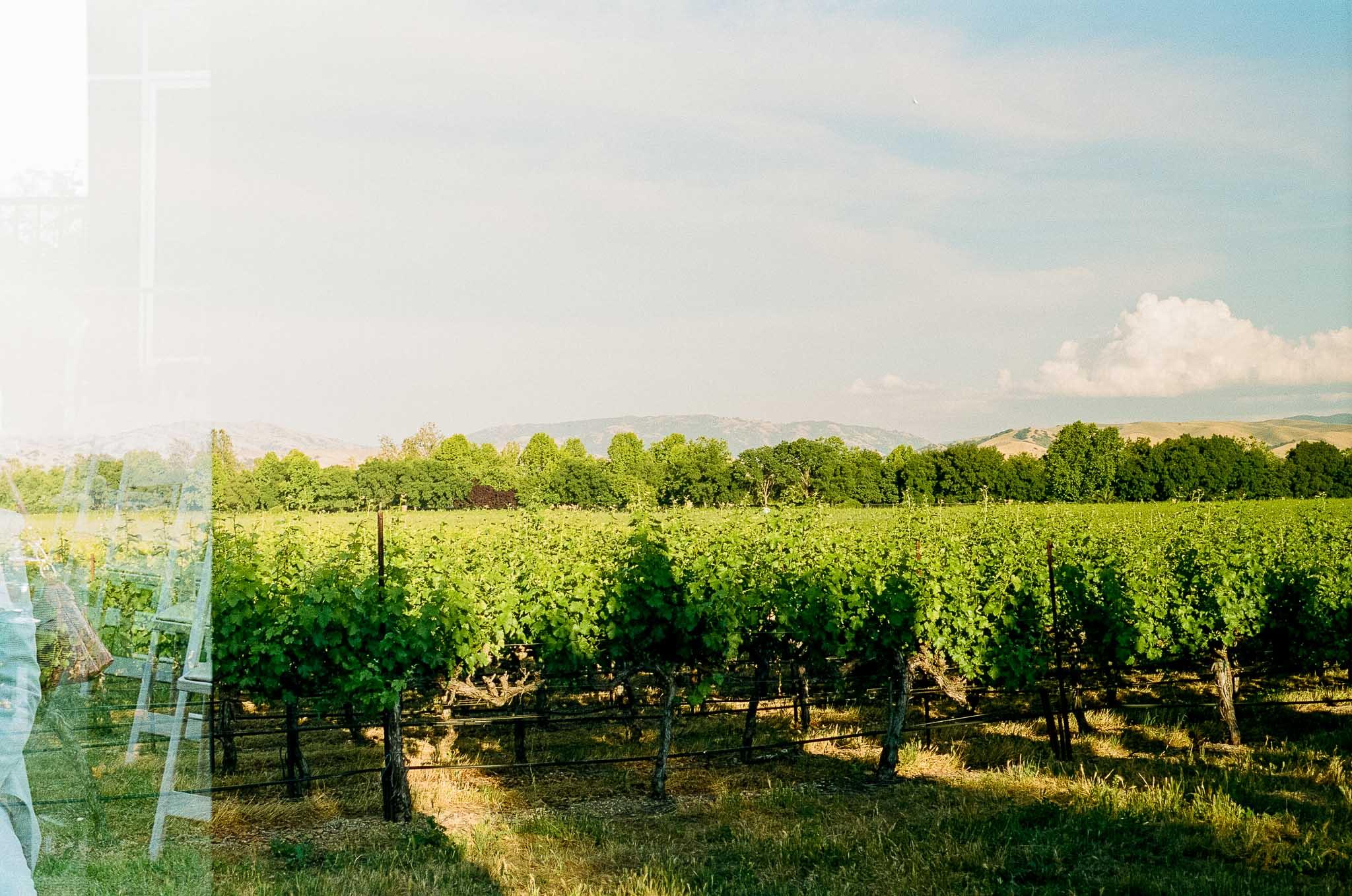California-Wine-Vineyard.jpg