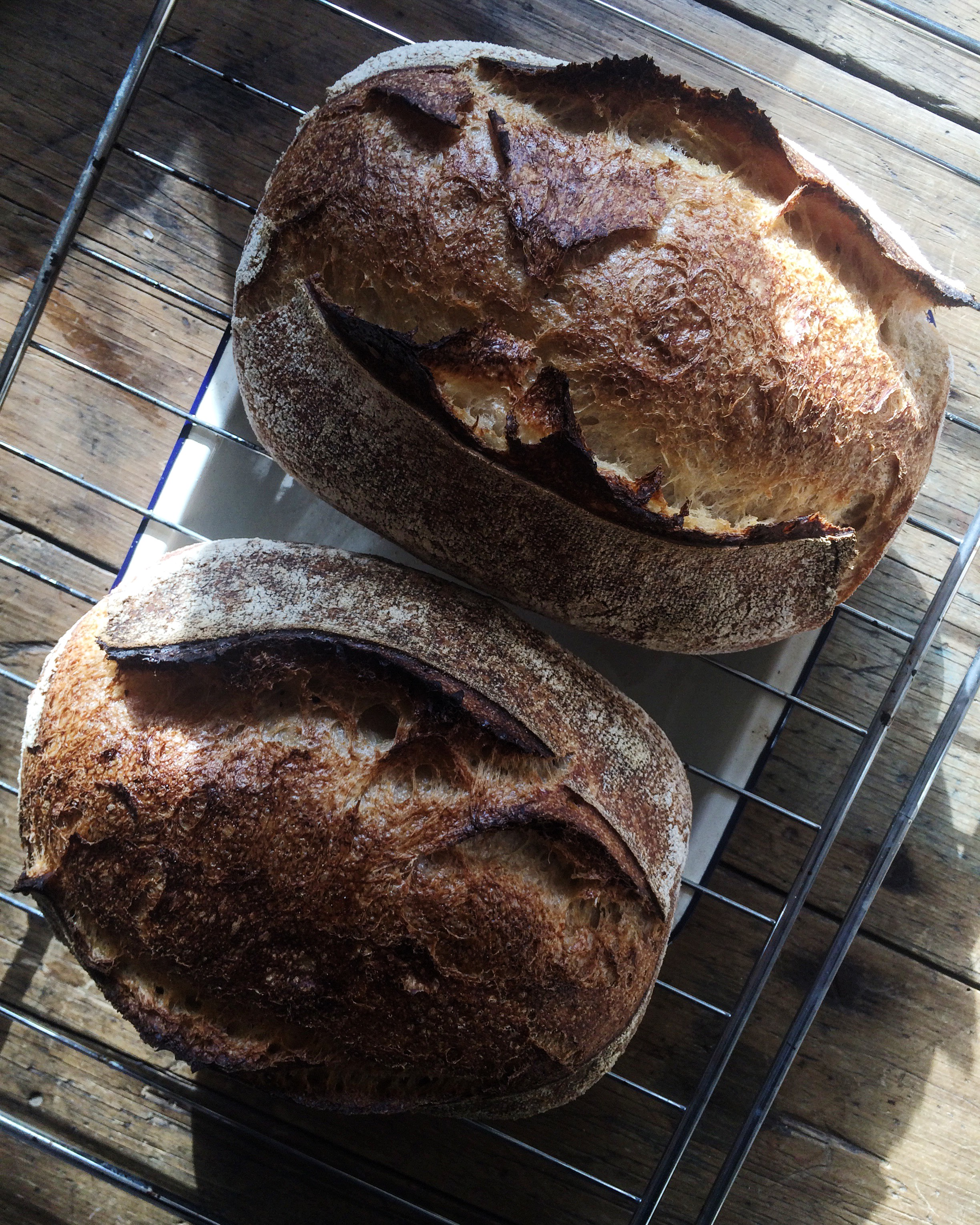This (and the following picture) is of Country Loaf, a recipe Katrina has been developing. She uses a mixture of white and wholegrain wheat flour and a little bit of whole spelt flour.