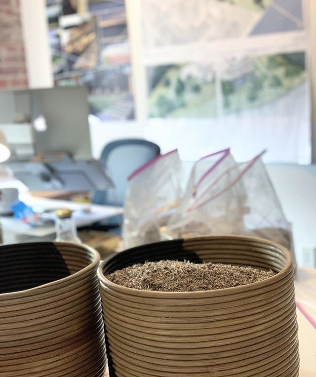 LOCH meadow mix prep for a garden on the Tred Avon River where we are establishing a native meadow surrounding the home by @martinsgrehl  Seeds:  @ernstseeds
