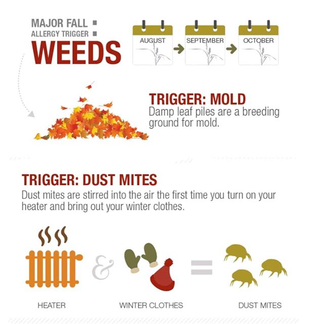🍂 Fall allergies are here! Ragweed is still active and fall mold is coming! Fight back and call us! 🍁 . . . . . . . #fallallergies #fall #mold #indoorair #airfilter #napervillechildrensclinic #napervilledoc #allergist #immunotherapy #allergycontrol #allergyfreeliving #allergist #allergyshots #dust #dustmites #HEPAfilter #asthmatrigger #asthma