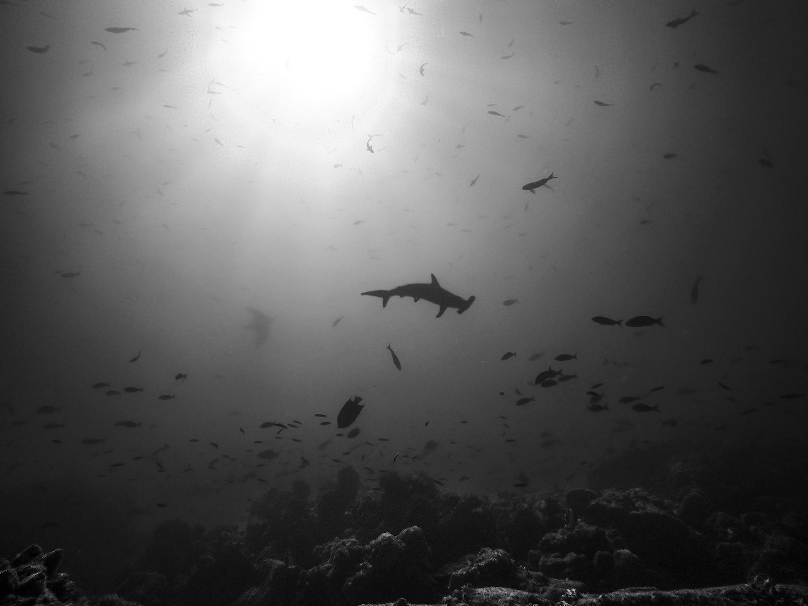 yacht videographer luxury yacht films super yacht savannah yacht film freelance scuba hammerhead shark