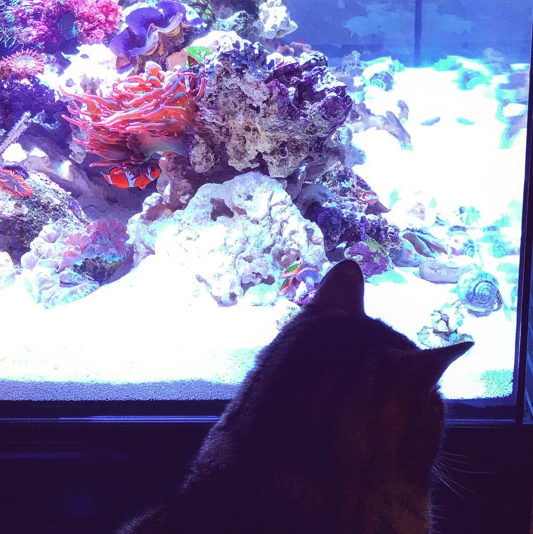 Mac enjoying the view
