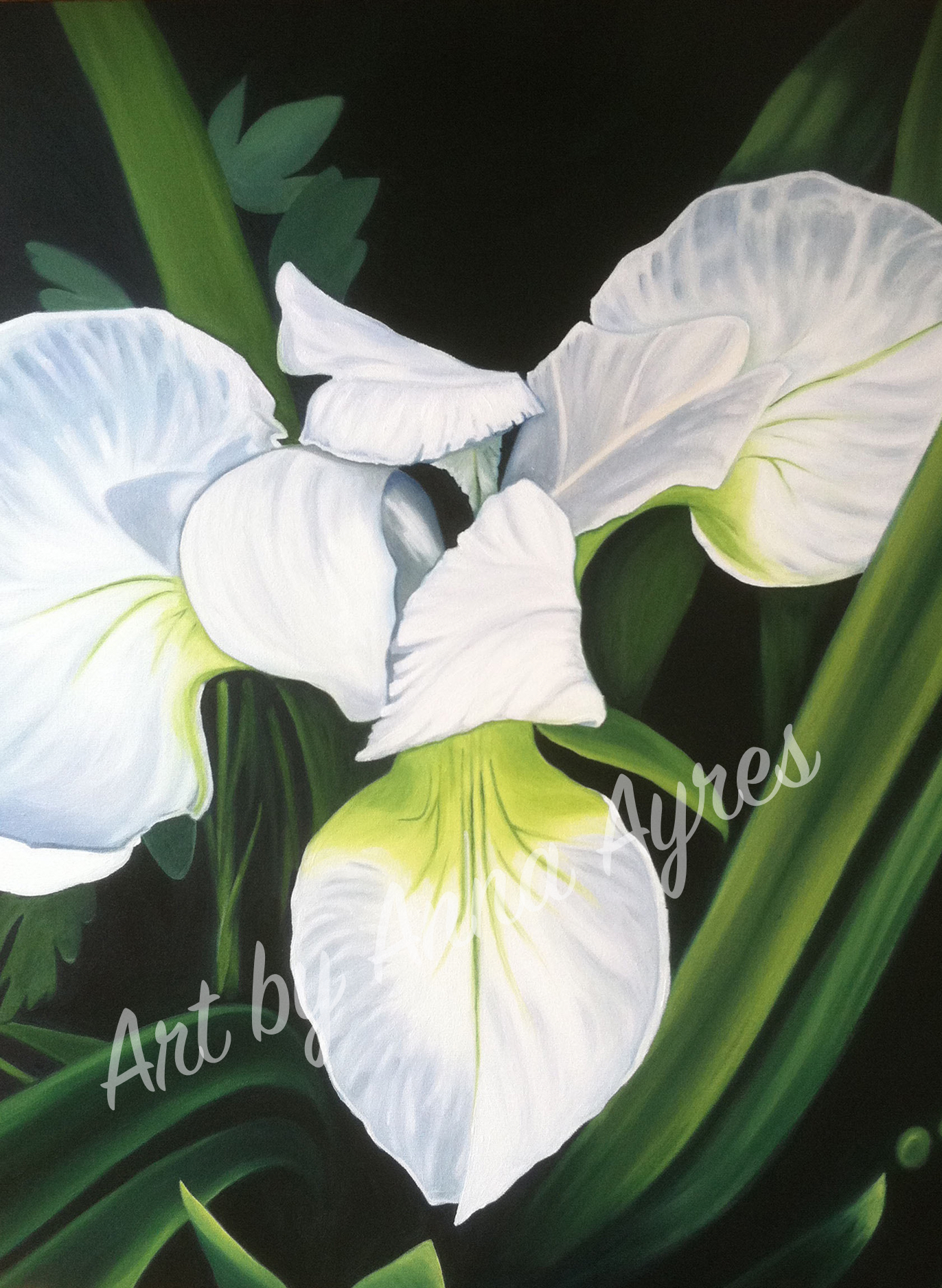 "White Iris - 28x22"" Oil on Canvas. Prints available here:  https://www.artbyannaayres.com/print-shop/"