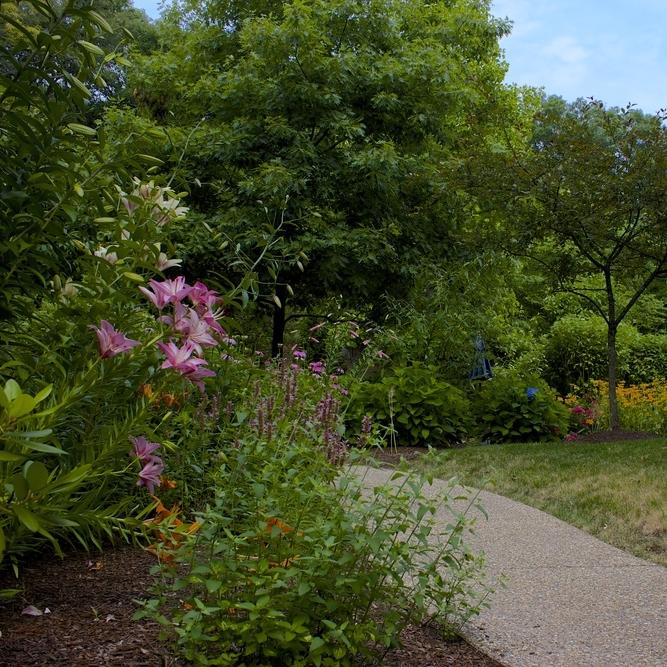St. Elizabeth Home Sensory Garden