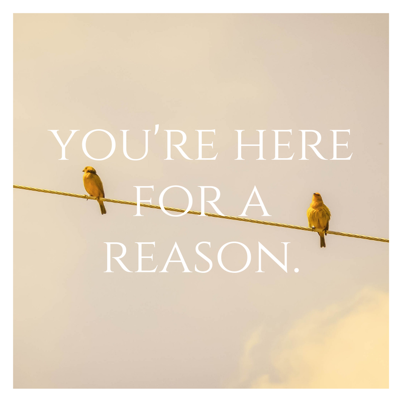 your-reason.png