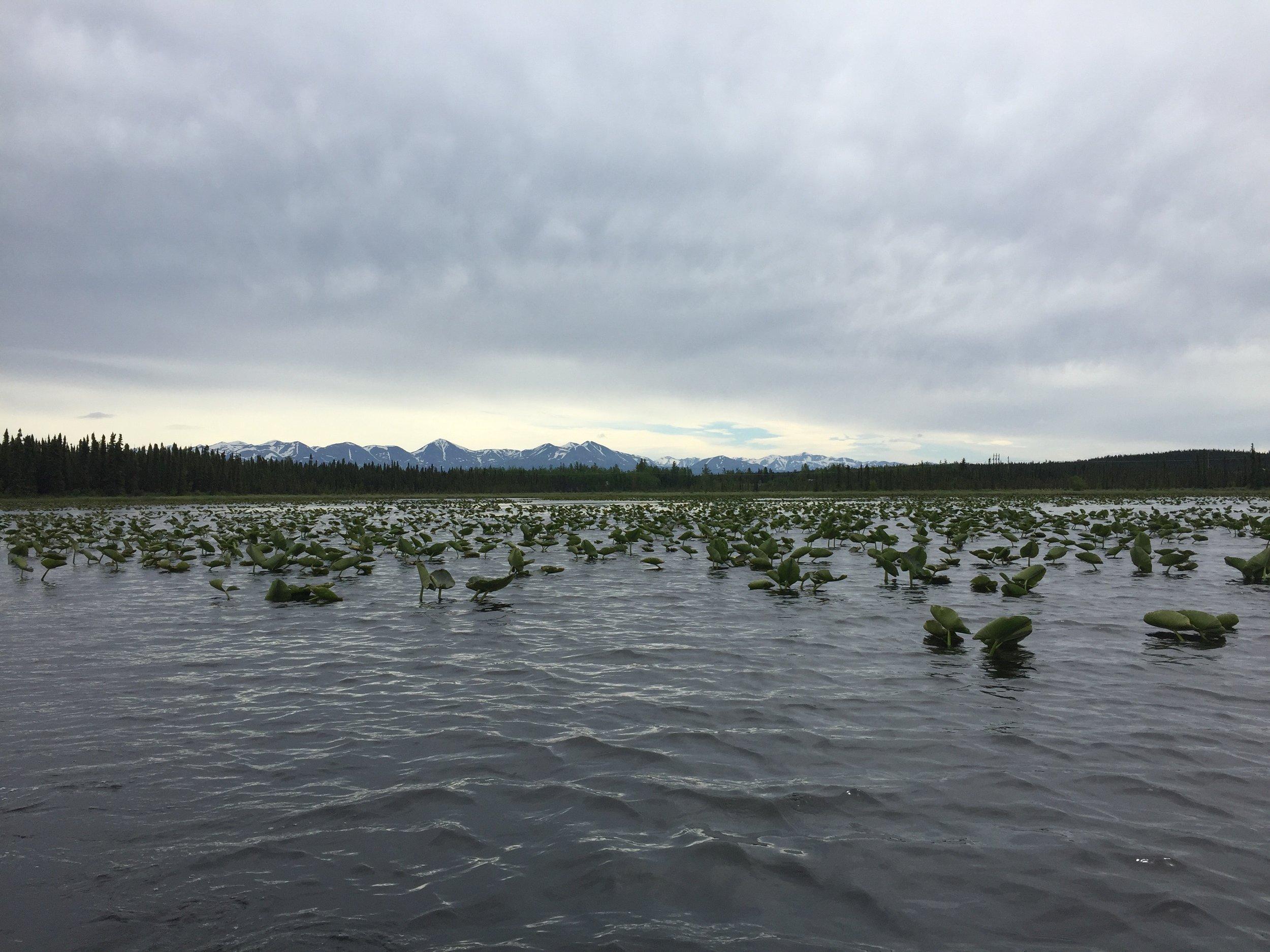 Watson Lake, Kenai National Wildlife Refuge