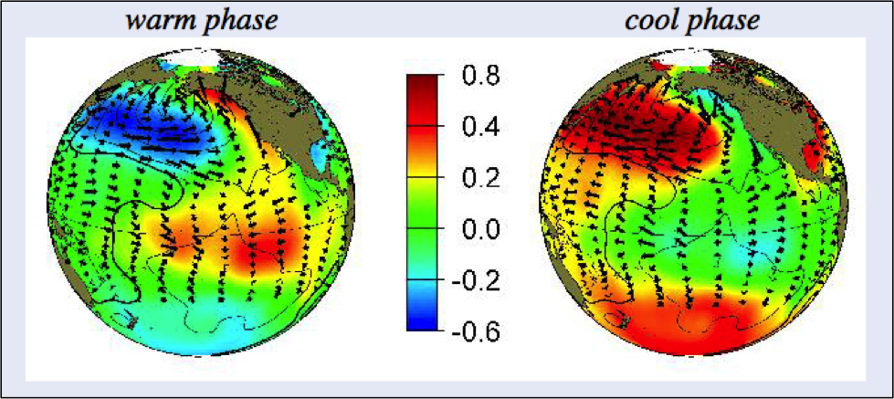 The Pacific Decadal Oscillation in its warm and cool phases. The scale indicates deviations in °C from average sea surface temperature (  http://research.jisao.washington.edu/pdo/)