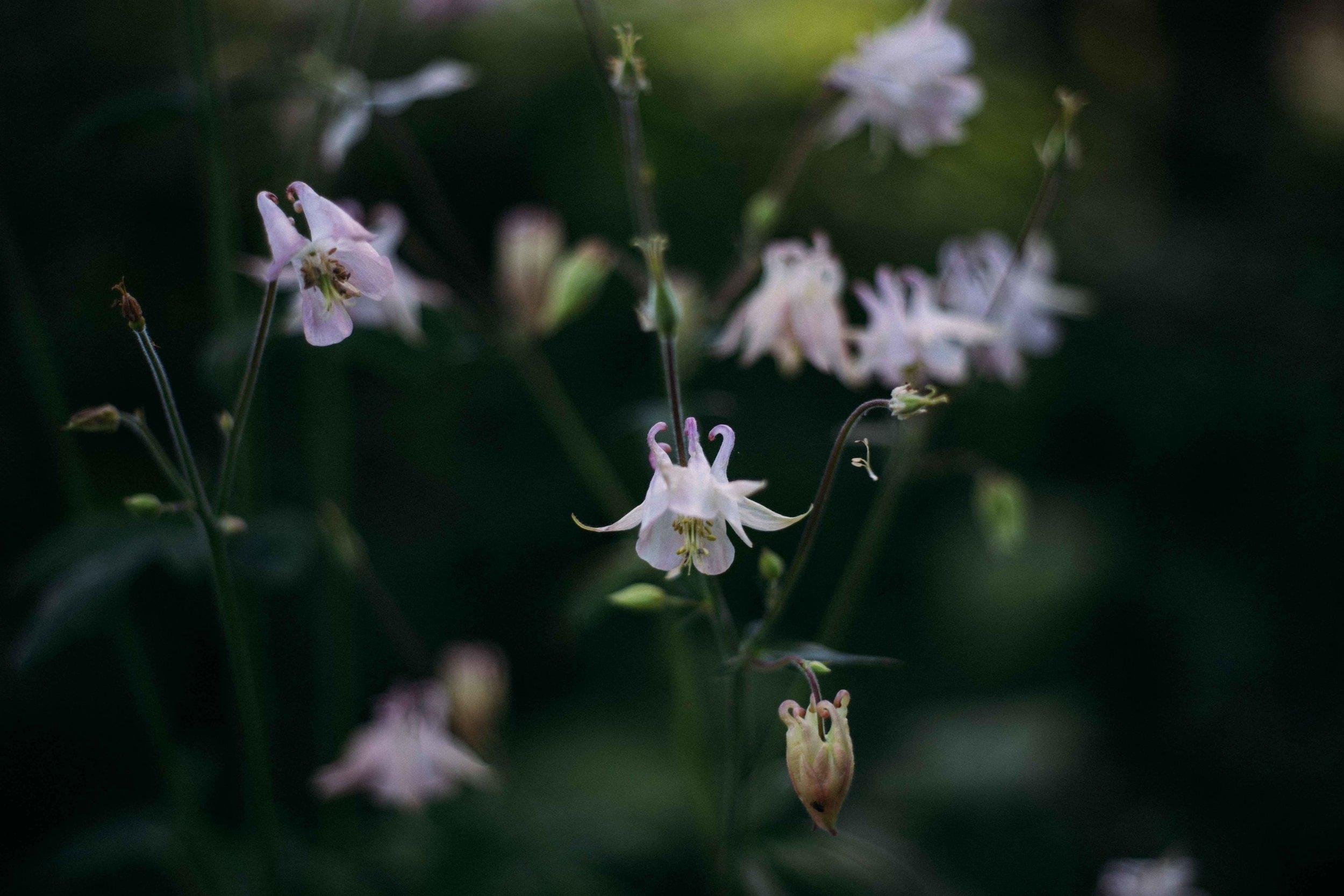 Gunilla Welin Brook  Jag skapar harmoniska utemiljöer och trädgårdar    Anlita mig