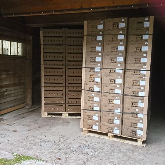 Lökleverans från Holland....i morgon blir det sortering. #vårlökar #samvanschootenflowerbulbs #löknörd #lökplantering #gunillawelinbrookträdgårdskonsult