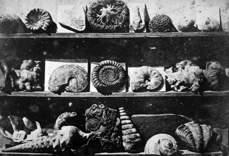 Louis-Jacques-Mandé Daguerre,  Shells and Fossils , 1839. Public domain.