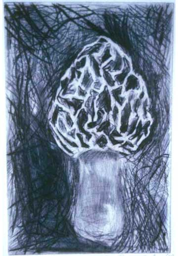 "Morel, 1999, etching, edition of 14, 10"" x 8"" (paper size)"