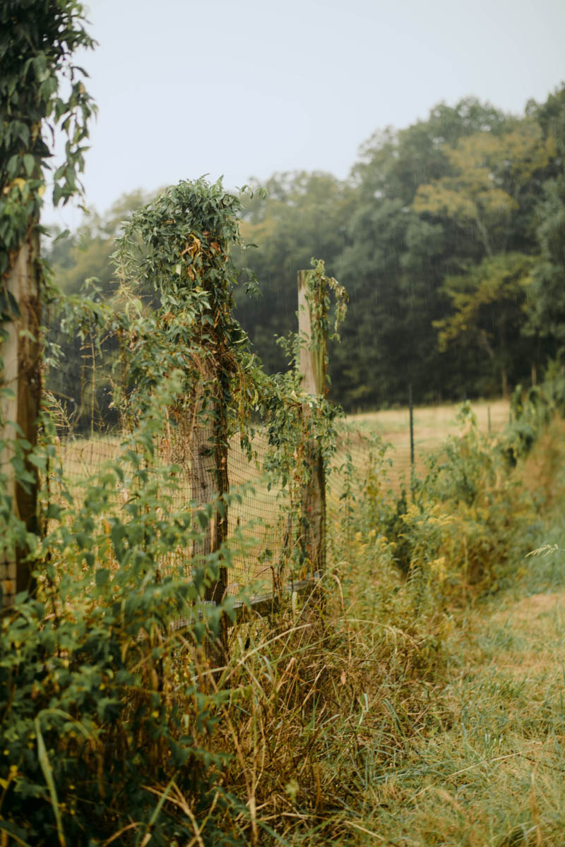 bloomsbury-farm-lifestyle-food-nashville-photographer-27.jpg