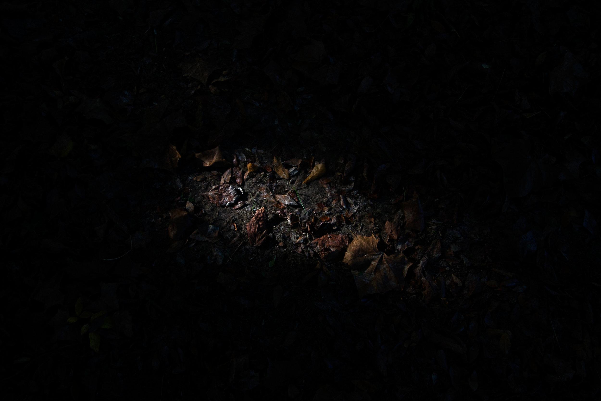 Light_leaf-1-5.jpg