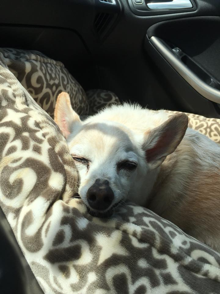On the way to the vet on the 8th.