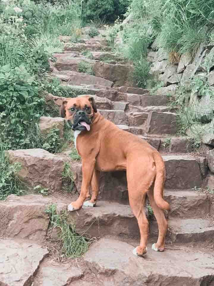 Hiking Arthur's Seat with a Dog.jpg