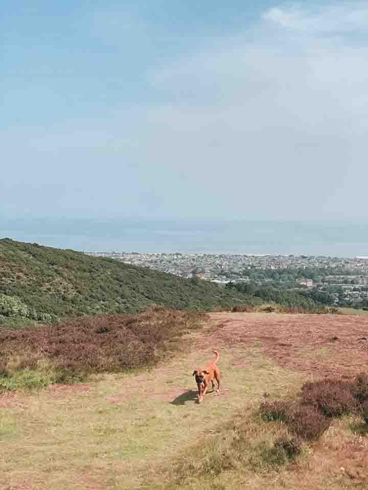Arthur's Seat Edinburgh Hikes.jpg
