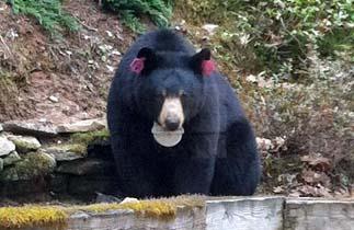 bear2-2014_edited-1.jpg