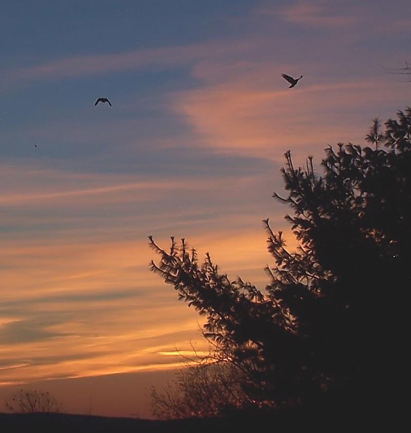 outside_sunset.jpg