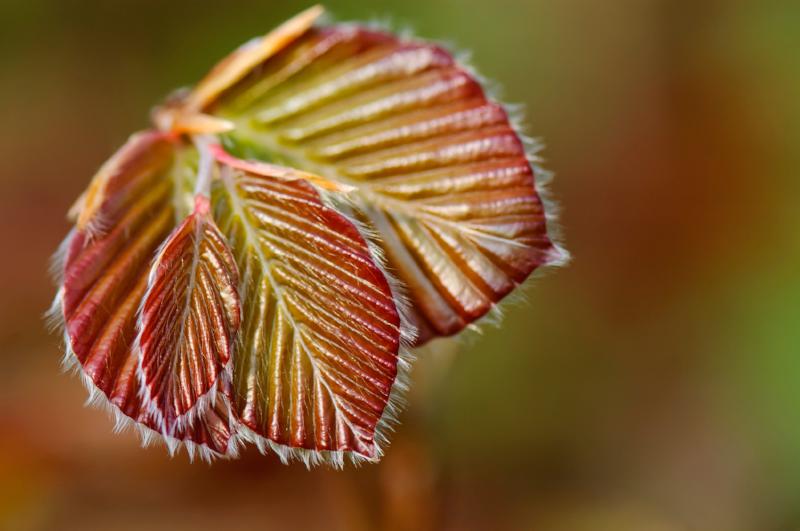 new-leaf-in-spring.png
