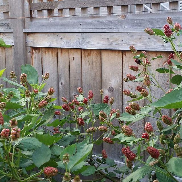 Organic gardening 2018