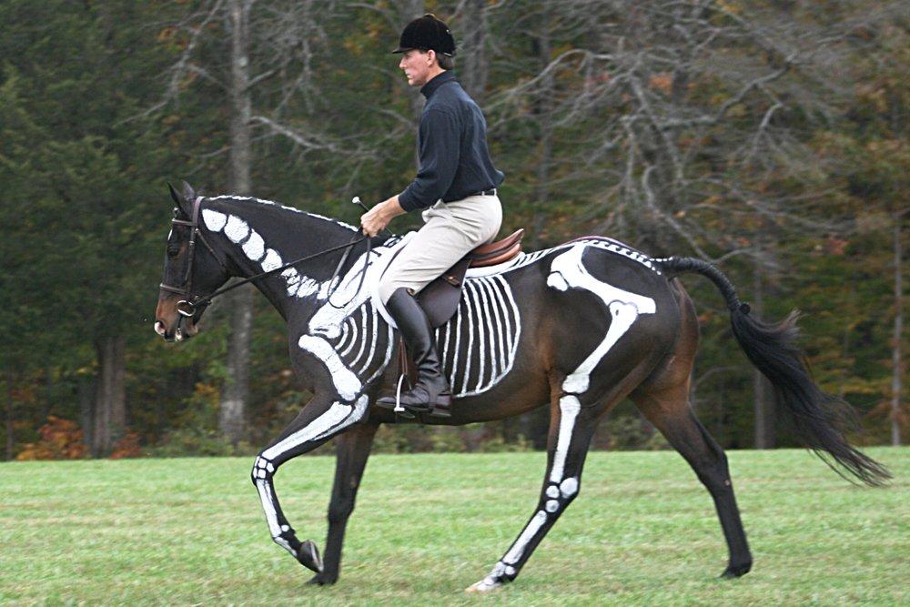 skeletonnorte.jpg