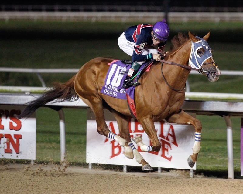 Under Pressure racehorse.jpg