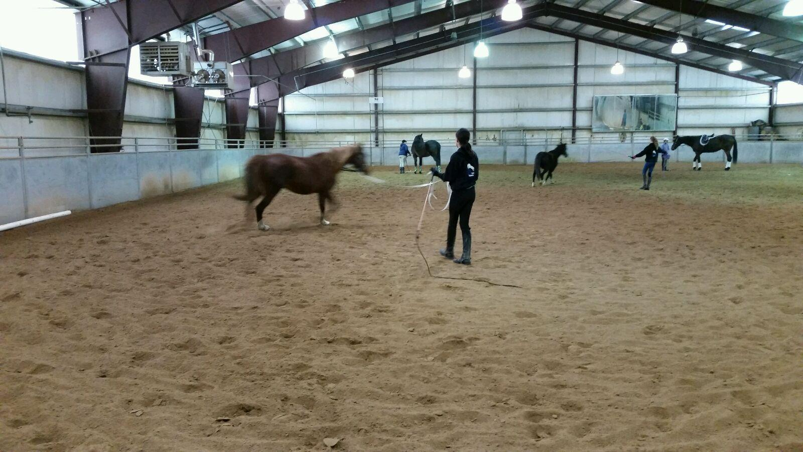 Lunging-Clinic-5.jpg