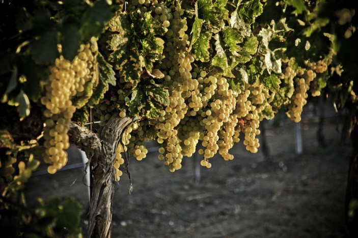 photo credit: Temecula Valley Winegrowers Association