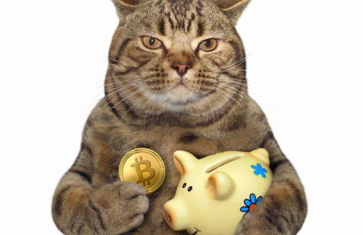 cat_btc_shutterstock_774921097-5bfc312ec9e77c0026316a28.jpg