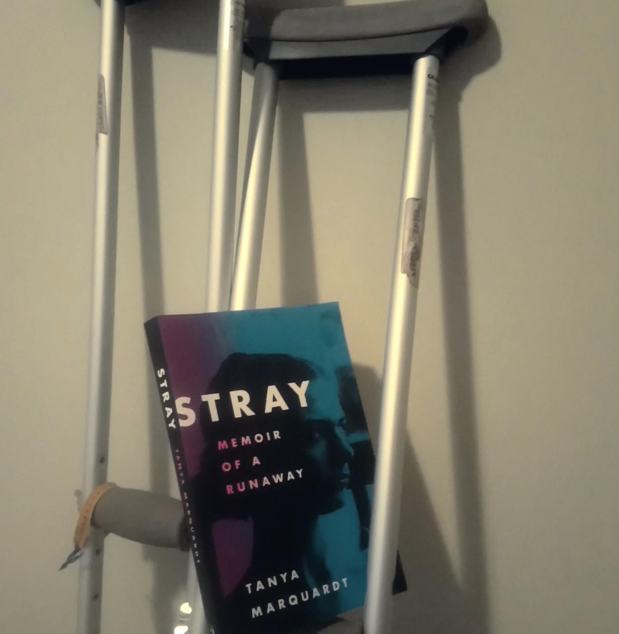 Stray on crutches.jpg