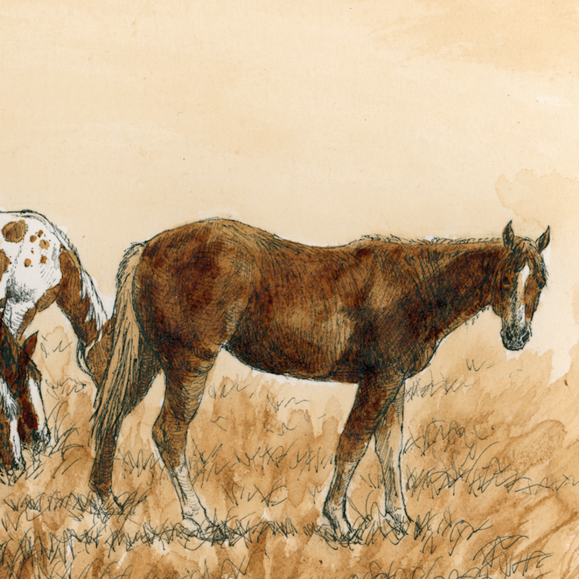 MOCHA MARES   PRINTS AVAILABLE