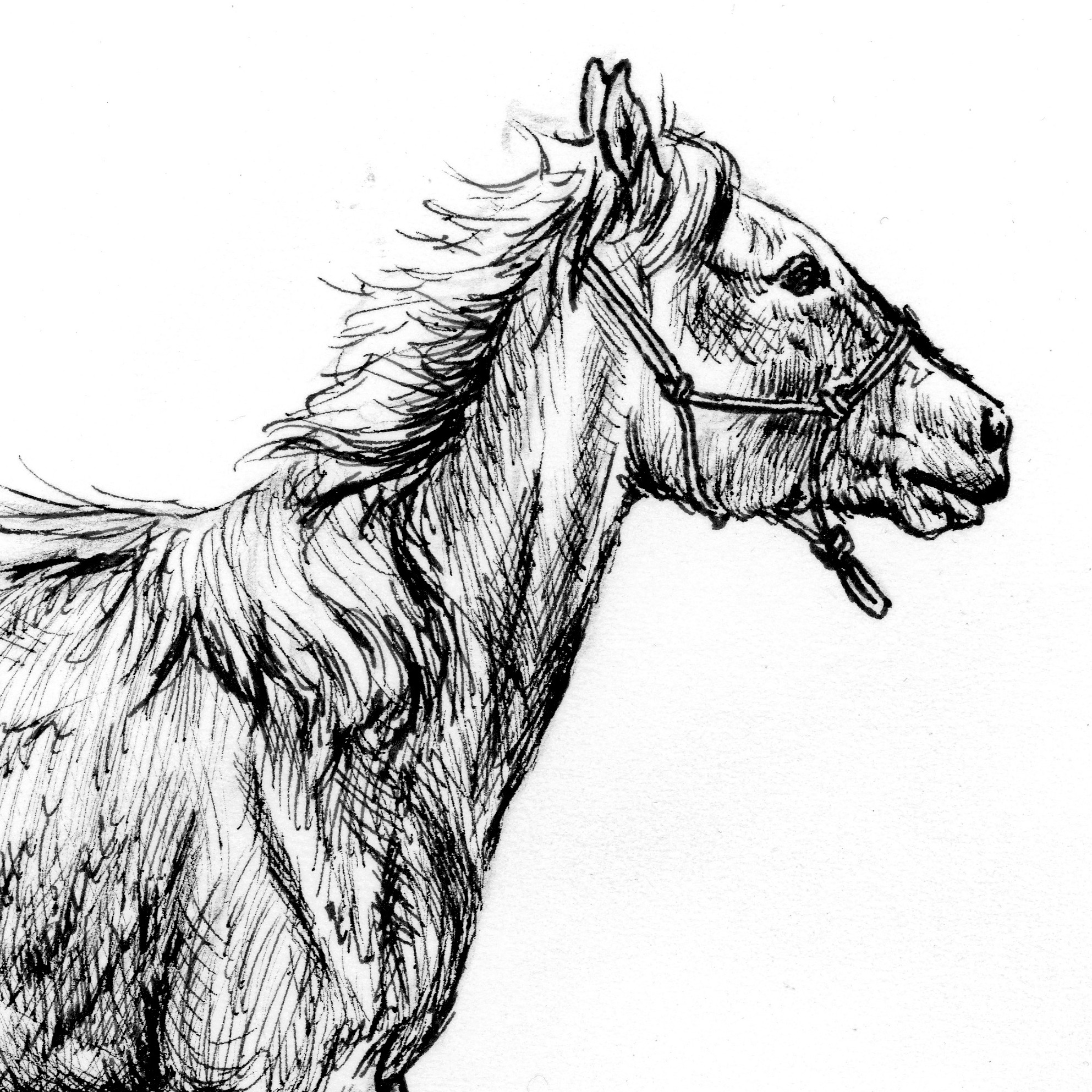 FRESH FILLY   PRINTS COMING SOON