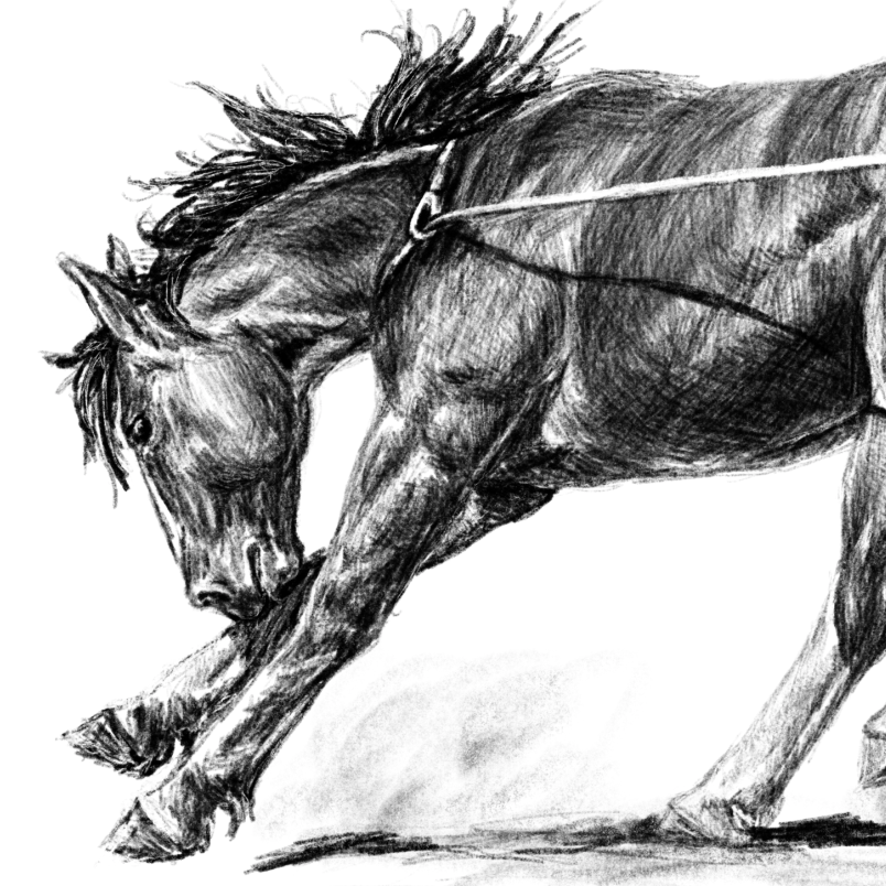 ROUGHSTOCK COLT   PRINTS AVAILABLE