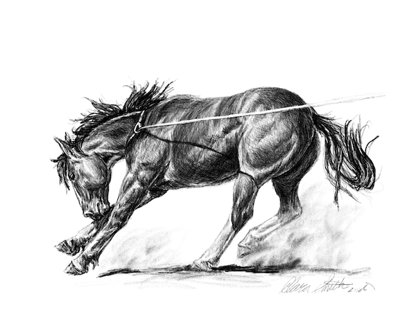 Roughstock Colt.png