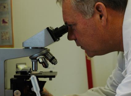 Dr. Corrigan examining a microscopic sample