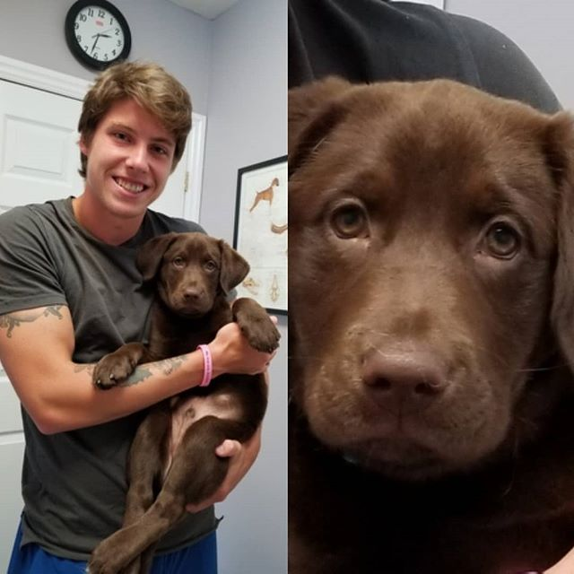 Look who came for a visit today! @marner_93 with his new handsome puppy Zeus 😊 #thornhillvetclinic #vetclinicsofinstagram #labrador #puppy #puppyvisit #chocolatelab