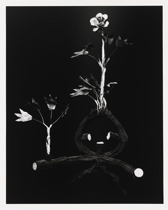 Miljohn Ruperto, Ulrik Heltoft, Voynich Botanical Studies, Specimen 52r Zima, 2014. © Miljohn Ruperto and Ulrik Heltoft.